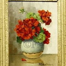 geranium13